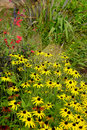 Colouful late summer garden border Royalty Free Stock Photo