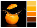 Colour palette swatch with complimentary swatches fruit concept Royalty Free Stock Photography