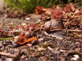 Colour photo of a family of snails Royalty Free Stock Photo
