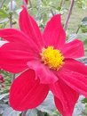 The colour of the summer flower like a fire Royalty Free Stock Image