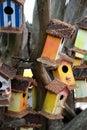 Coloured bird houses