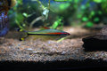 Coloured fish in an aquarium generic vegetation Stock Photos