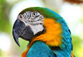 Coloured Macaw parrot Royalty Free Stock Photo