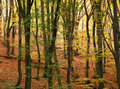 Colourful autumn in beech forest Royalty Free Stock Images