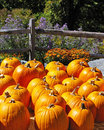 Colourful Autumn Pumpkins Stock Photo