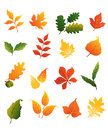 Colourful autumnal leaves set isolated on white background for seasonal design Stock Photos