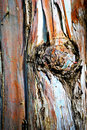 Colourful bark detail photograph of an old tree s Stock Images