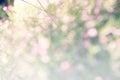 Colourful Of Bokeh  Light Blur...