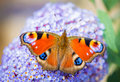 Colourful butterfly Royalty Free Stock Photo