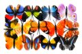 The colourful butterfly isolated on white background Royalty Free Stock Photo