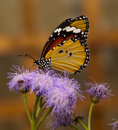 Colourful butterfly on a purple flower Stock Images