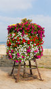 Colourful display of pink white red and yellow petunias on a stand at the seaside Royalty Free Stock Photo