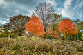 Colourful when fall comming,Autumn in Central Park Royalty Free Stock Photo