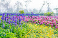 Colourful Flower in Formal Garden Royalty Free Stock Photo