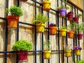 Colourful Flower Pots on Wooden Wall Royalty Free Stock Photo
