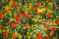 Colourful flowerbed Royalty Free Stock Images