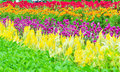 Colourful flowerbed Stock Image