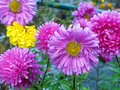 Colourful Flowers Growing Outdoors