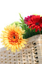 Colourful gerbera daisies in a basket red and yellow ornamental woven wicker isolated on white Stock Photo