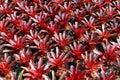 Colourful kwiat Zdjęcie Stock