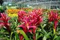 Colourful kwiat Zdjęcia Stock