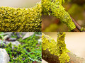 Colourful moss very nice and bright on trees Stock Photo