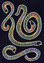 Colored hand drawn picture of patterned snakes. Royalty Free Stock Photo
