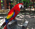 Colourful parrot ara araruana at jungle Stock Image