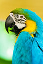 Colourful parrot  sitting on the perch Stock Images