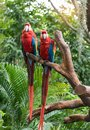 Colourful parrots bird sitting Royalty Free Stock Photo