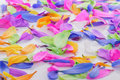 Colourful petals on a white background Stock Photos