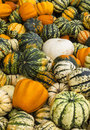Colourful pumpkins fresh at a local farmer s market Royalty Free Stock Images