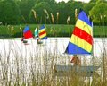 Colourful sail boats on a lake four with sails being sailed with reeds in the for ground Royalty Free Stock Photo