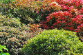 Colourful shrubs mature in english garden Royalty Free Stock Image