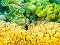 Colourful sponges of the great barrier reef underwater and corals in australia Stock Photography