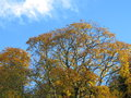 Colourful tree and the sky blue in switzerland Royalty Free Stock Images