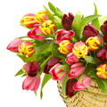 Colourful tulips basket white Stock Images