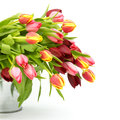 Colourful tulips in a bucket Royalty Free Stock Photography