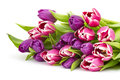 Colourful tulips on white background Stock Images