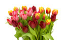 Colourful tulips on white background Royalty Free Stock Photography