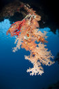 Colourful underwater tropical coral reef scene. Stock Photography