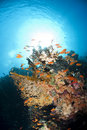 Colourful underwater tropical coral reef scene. Stock Photos