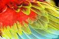 Colourful wings of macaw Royalty Free Stock Photo