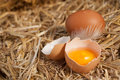Colourful yellow yolk in a broken eggshell Royalty Free Stock Photo