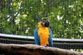 Colourfull parrot on a tree looking down Royalty Free Stock Images
