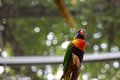 Colourfull parrot on a tree looking down Stock Images