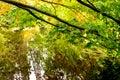 Colours of autumn in Benmore Botanic Garden, Scotland Royalty Free Stock Photo