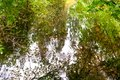 Colours of autumn in water reflection at Benmore Botanic Garden, Scotland Royalty Free Stock Photo
