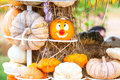 Colours Pumpkins Royalty Free Stock Image