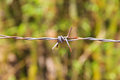 Colse up barbed fence